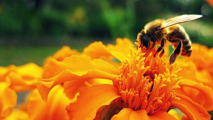 Food Explorers Bee